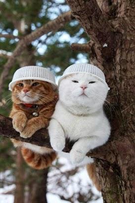 Başına Güneş Geçmiş Kediler :d