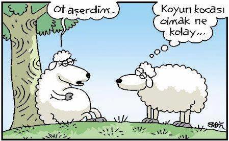 Koyun Kocası Olmak...