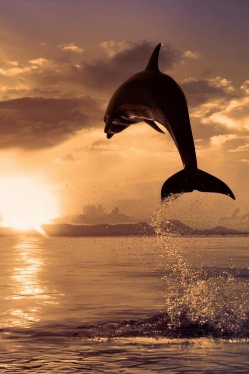 """""""Bu yaz, denizkızı mı olmak istersiniz, yoksa bir balina mı?   Okunası :)"""