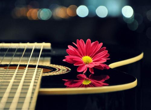 Gitar Aşkı.