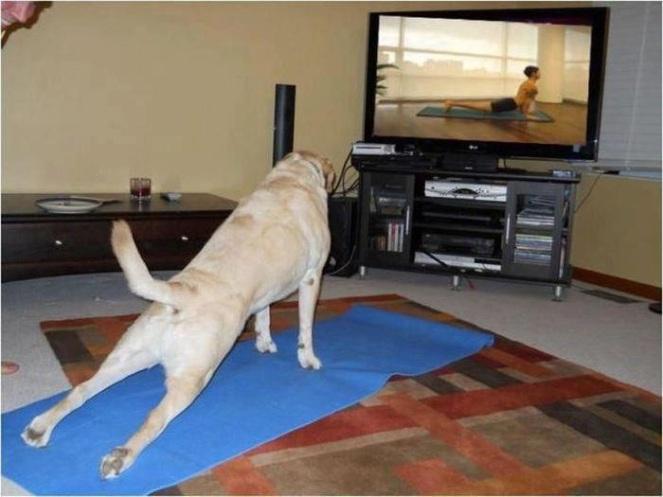 Köpek Ve Yoga :D