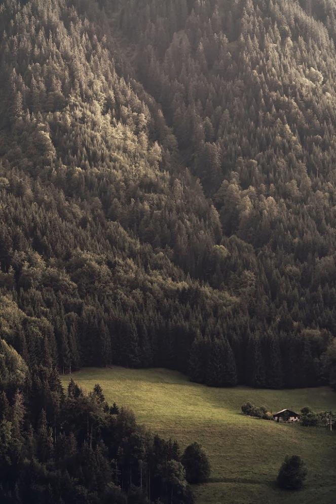 ağaç,doğa