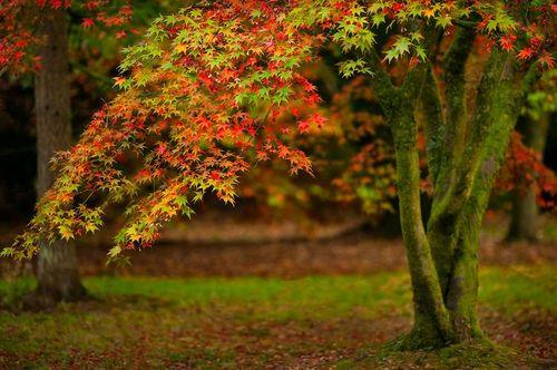 yaşam,ağaç