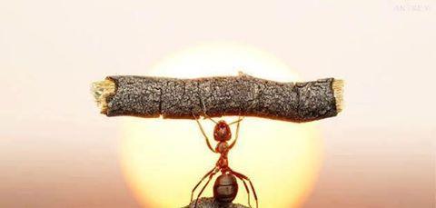karıncanın azmi(1)