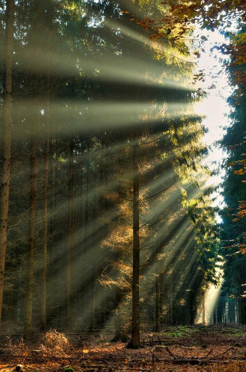 orman,doğa