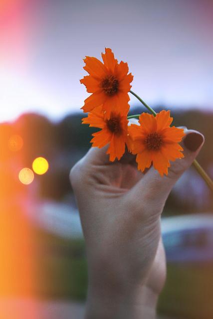 umut,çiçek