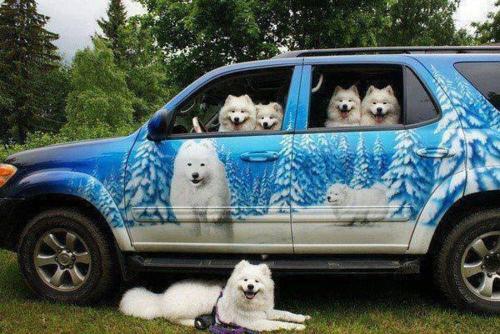 şirin köpekler