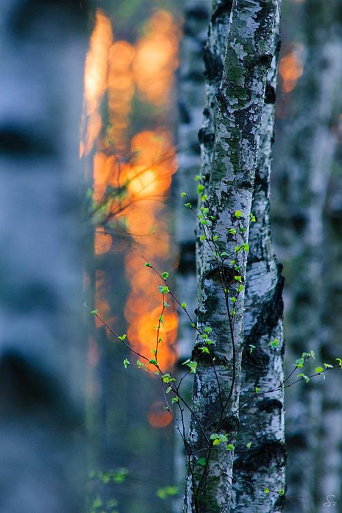 doğa,ağaç,fotoğraf aşkı