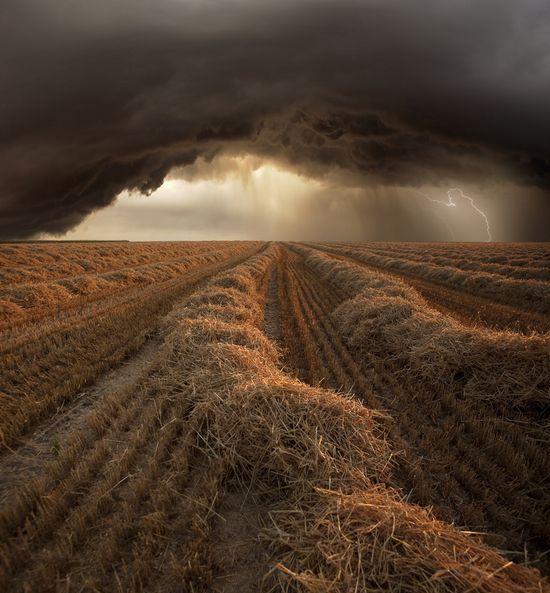 tarla,yağmur