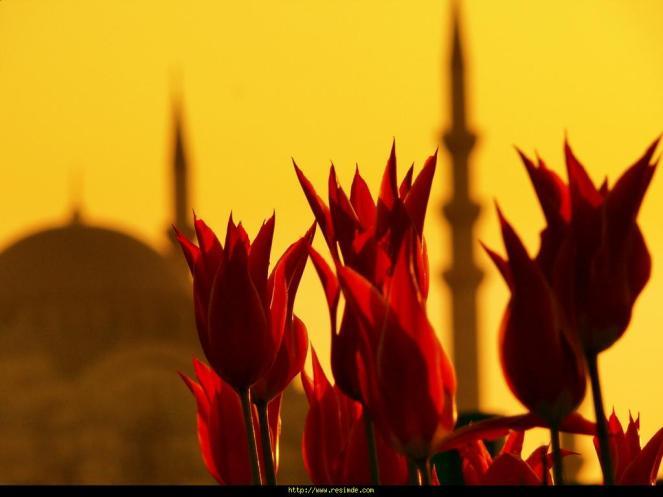 cami_ve_cicekler_689856