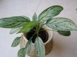 Evin Havasını Temizleyen 30 Bitki