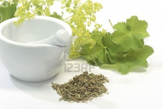 5540676-herbal-tea-with-ladys-mantle-and-mortar-on-white-background
