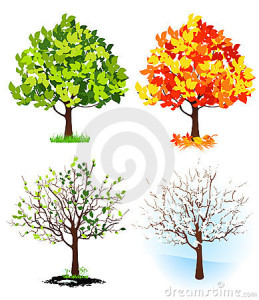 four-season-trees-thumb15472036-259x300