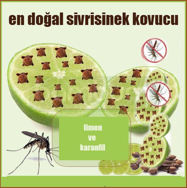 en-dogal-sivrisinek-kovucu