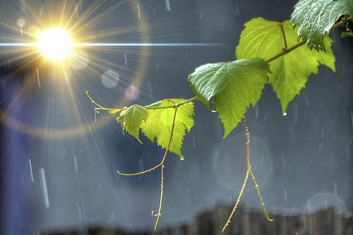 Yağmur Sonrası Güneş