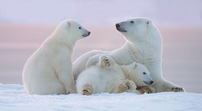 kutup ayısı 3