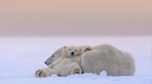 kutup ayısı 4