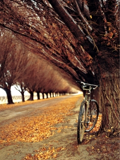 Argentina, Mendoza, bicycle on side of dirt road lined with trees